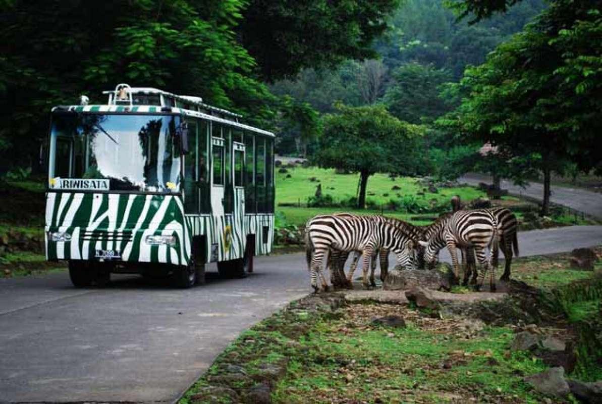 Taman Safari Indonesia Bogor Safari Siang E Ticket Khusus Domestik KITAS