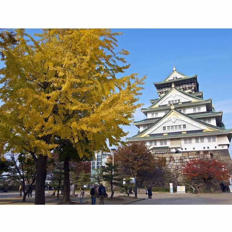 Jual Ayo Wisata Japan Kirei Tour Luar Negeri 6d5n Seat In Coach Minimal 2 Pax Keberangkatan Januari December 2020 Online Desember 2020 Blibli