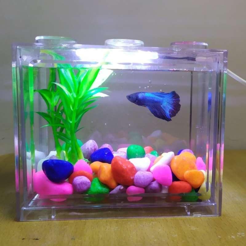 Jual Oem Susun Lampu Led Usb Aquarium Ikan Hias Hitam Size Kecil Online Desember 2020 Blibli