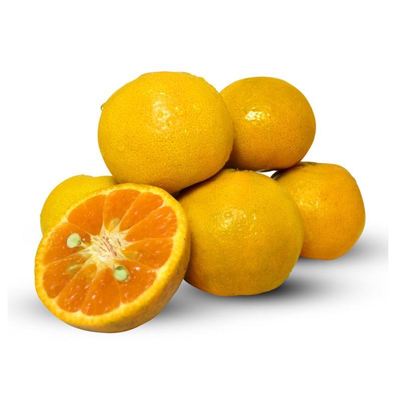 jenis jeruk populer santang