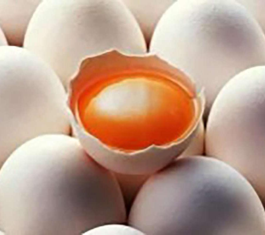 Jual Sembaqo Telur Ayam Kampung Merah 1 Ikat 300 Butir Online November 2020 Blibli Com