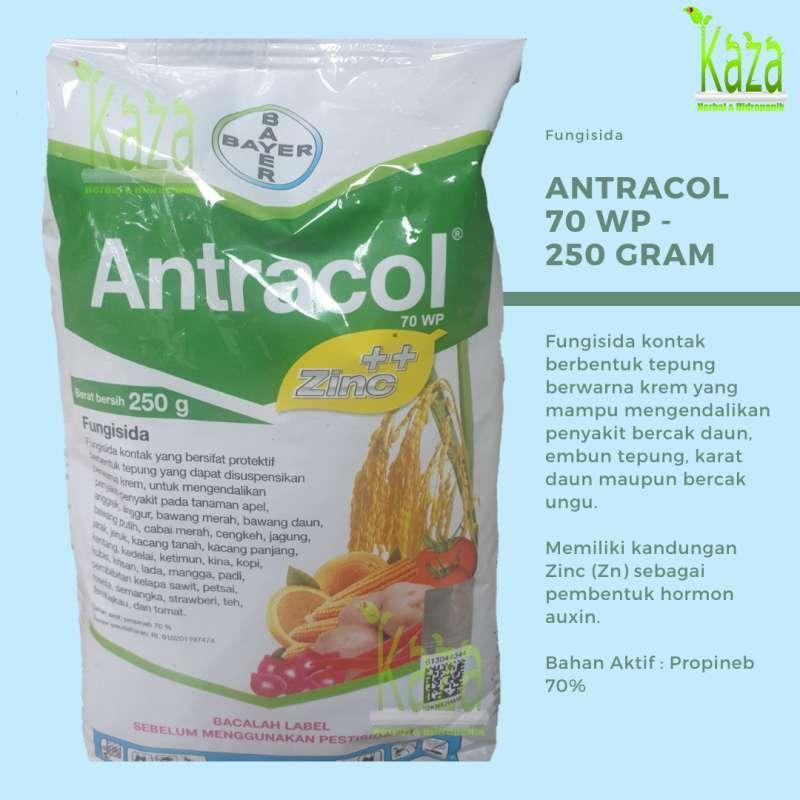 Jual Fungisida Antracol 70 Wp 250 Gram Plus Zinc Anti Jamur Penyakit Bercak Karat Daun Terbaru Juli 2021 Blibli