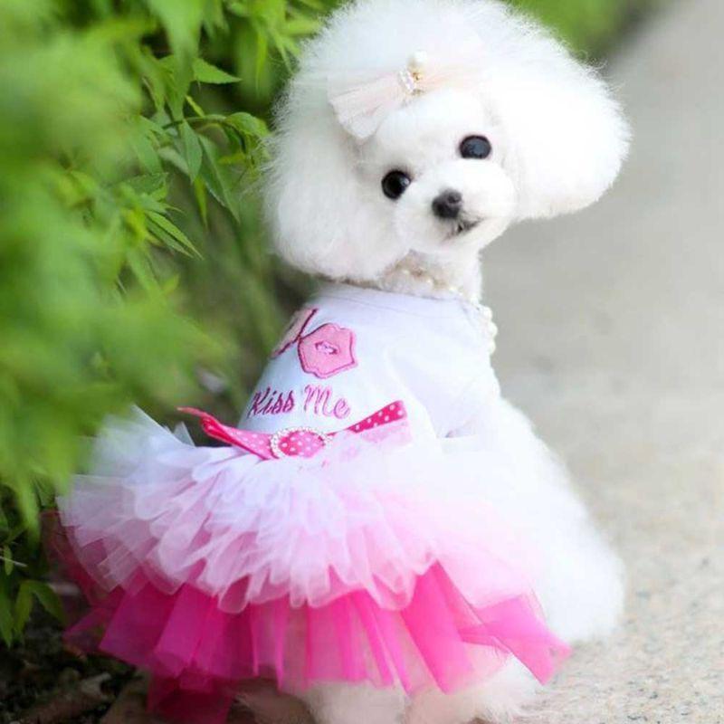 Jual H Ikea Small Dog Girl Formal Dress Color Block Mesh Princess Dress For Pet Puppy Online November 2020 Blibli
