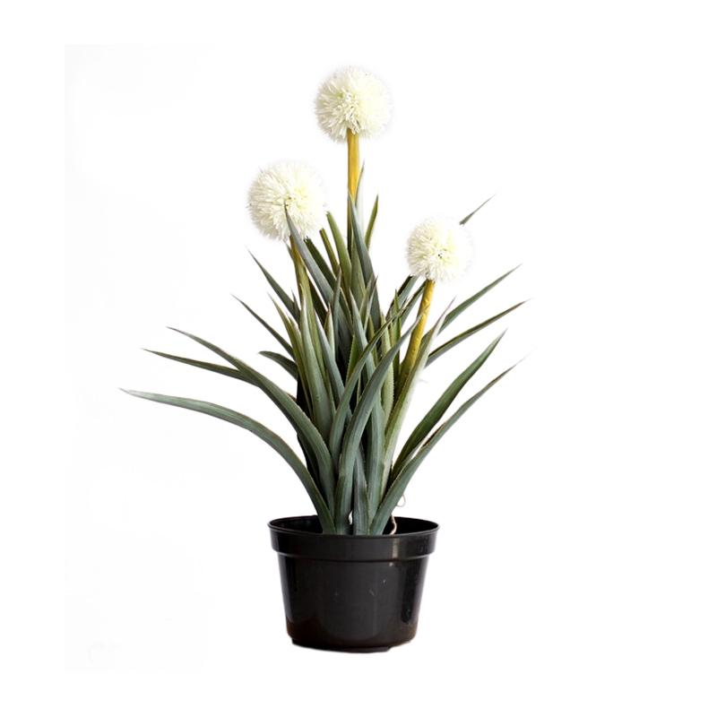 Thema Home 2388 Big Ball Orchid A3 Tanaman Hias