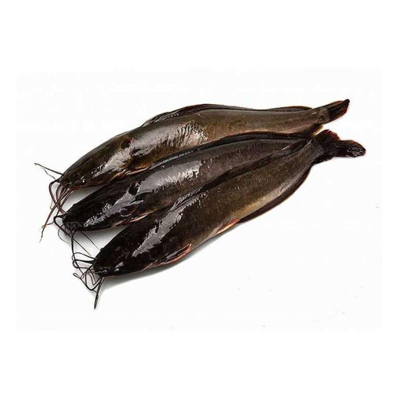Jual Afcbandung Ikan Lele Segar Hidup Fresh 1 Kg 3 4 Ekor Online Januari 2021 Blibli