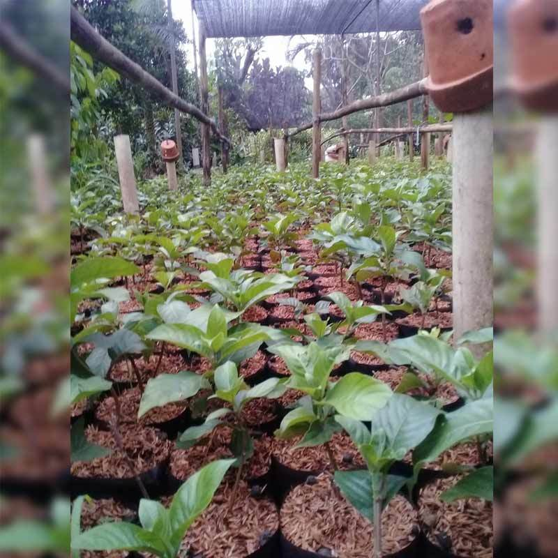 Jual Zplant Bunga Nusa Indah Tanaman Hias Merah Online November 2020 Blibli Com