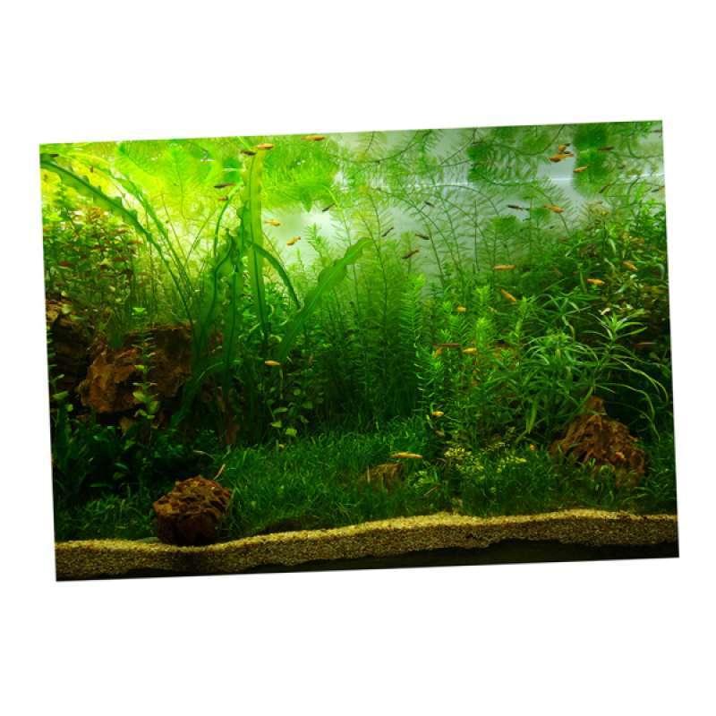 Jual Pvc Aquarium Background Poster, Fish Tank Plants Landscape Waterproof  Terbaru Juni 2021 | Blibli