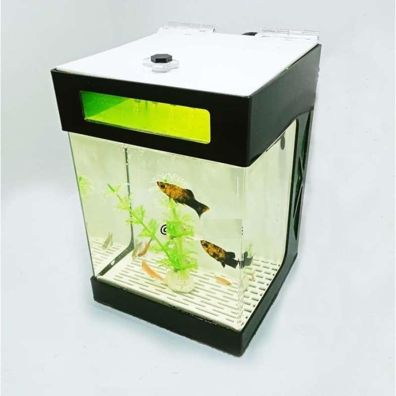 Jual Akuarium Mini Akuarium Cupang Aquarium Mini Aquarium Cupang Online Januari 2021 Blibli
