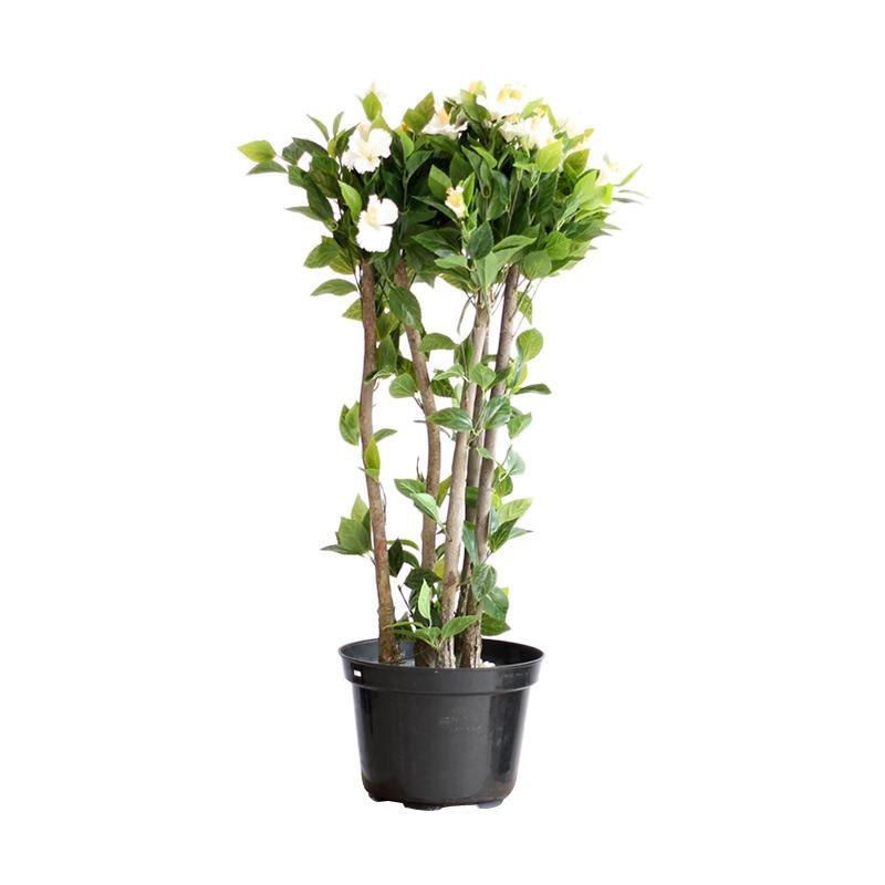 Thema Home 2407 Fiberglass Flower A3 Pots and Planters