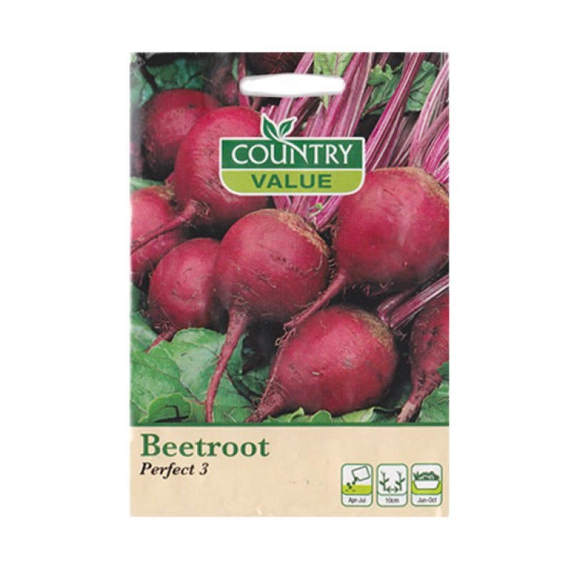 Country Value Beetroot Perfect 3 Merah Bibit Tanaman