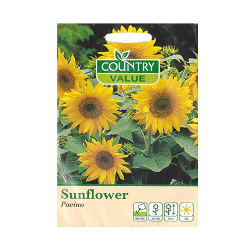 Country Value Sunflower Pacino Bibit Bunga