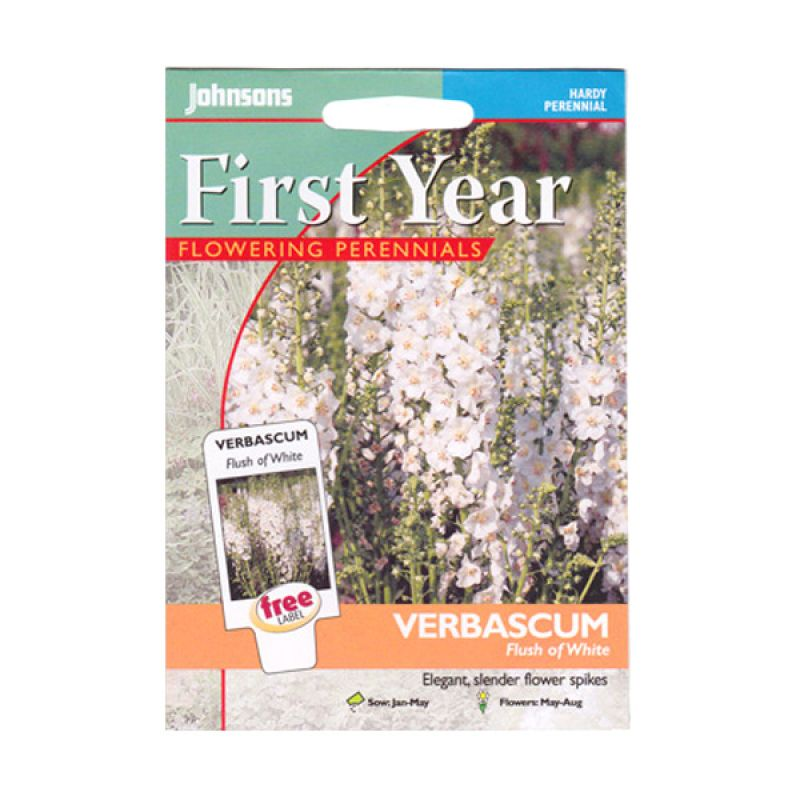 Johnsons Seed Verbascum Flush of White Bibit Tanaman