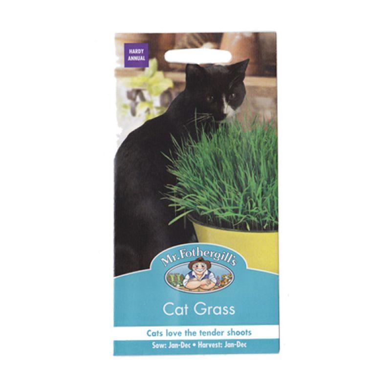 Mr Fothergill's Cat Grass Hijau Bibit Tanaman