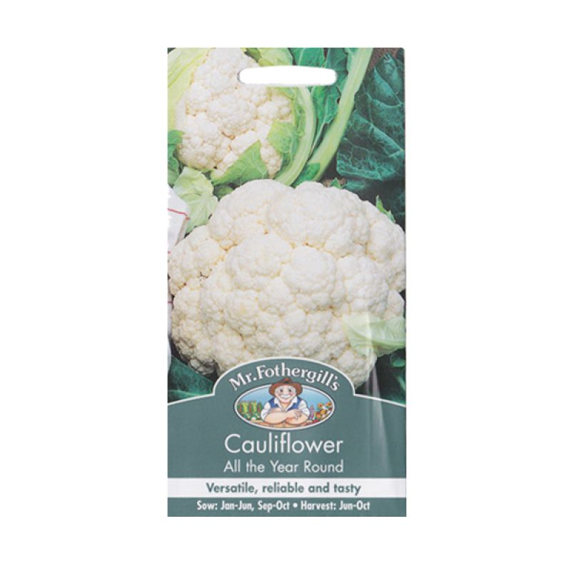 Mr Fothergill's Cauliflower All The Year Round Putih Bibit Tanaman