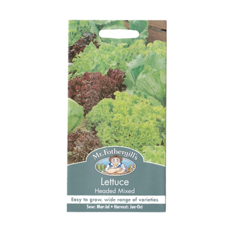 Mr Fothergill's Lettuce Headed Mixed Bibit Tanaman