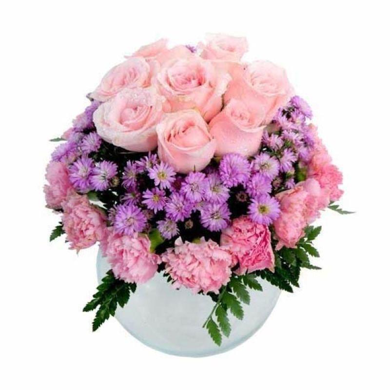 FA Cristal Rose
