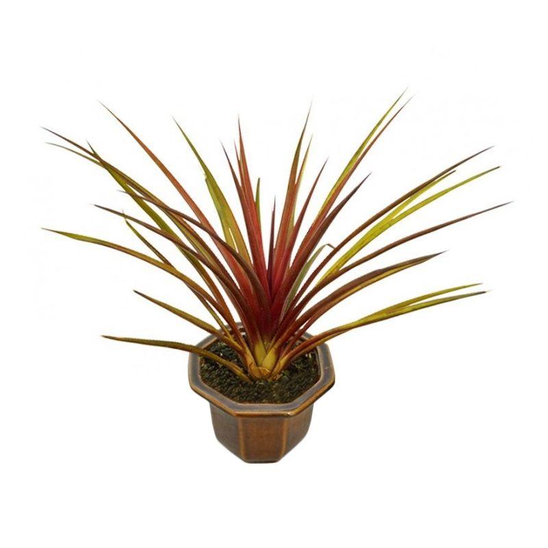 Kebun Bibit Ananas Red Brust Tanaman