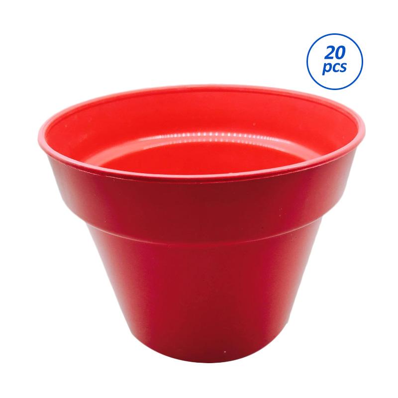 Primrose Pot Tanaman - Merah [20 pcs]