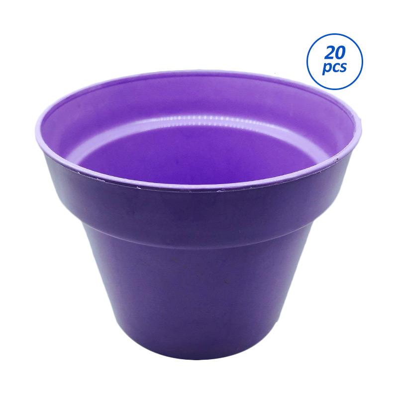 Primrose Pot Tanaman - Ungu [20 pcs]