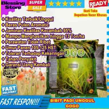 Bibit Benih Padi Gogo Bibit Padi Gogo Benih Padi Gogo Benih Padi Unggul Gogo Bibit Padi Unggul Gogo Original Aceh