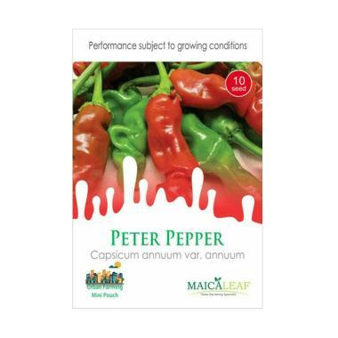 Maica Leaf Cabe Peter Pepper Benih Tanaman [10 Benih]