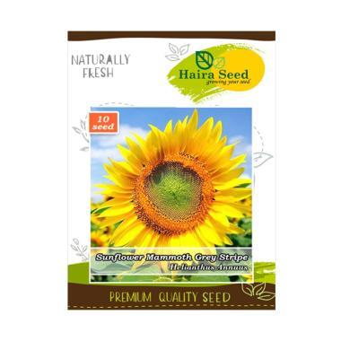 Haira Seed Bunga ...