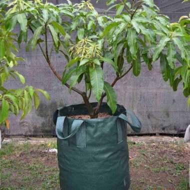 harga Surya Guna Tabulampot Kelengkeng Easy Grow Planter Bag [45 L] HIJAU Blibli.com