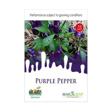 Maica Leaf Cabe Ungu Purple Pepper Benih ...