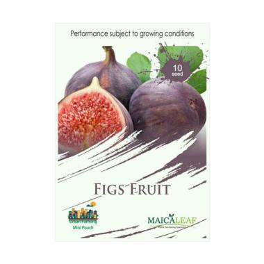 Maica Leaf Buah Tin Figs Fruit / Buah Surga Bibit Tanaman [10 Benih]