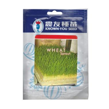 Known You Seeds Benih Wheat Grass Rumput Gandum [50 G]