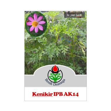 harga Benih Dramaga Benih Kenikir Bunga Pink IPB AK14 Blibli.com