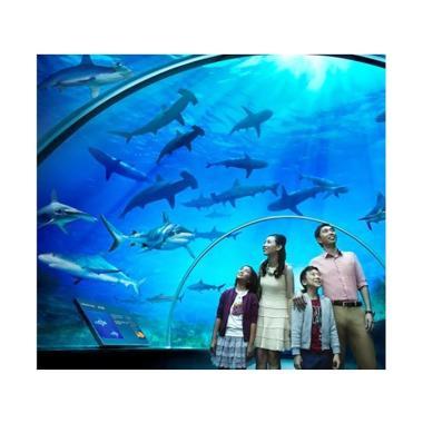 Berikut Ini Beberapa Wahana Di Jakarta Sea Aquarium