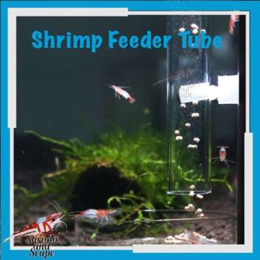 harga Shrimp Tube Feeder Glass / Pengarah Makanan Udang Hias Bening Feeding 30cm Blibli.com