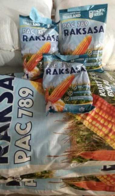 Benih Jagung hibrida PAC 789 RAKSASA 1Kg Pacific Seeds