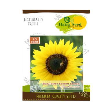 Haira Seed Bibit Bunga Matahari Lemon Queen
