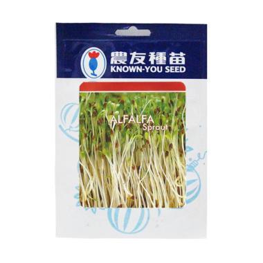 Known You Seeds Benih Alfalfa Sprout Benih Tanaman