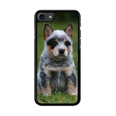 Flazzstore Australian Cattle Dog Y1 ...  for iPhone 7 or iPhone 8