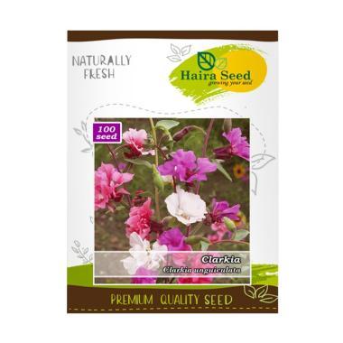 Haira Seed Bibit Bunga Clarkia Benih Tanaman